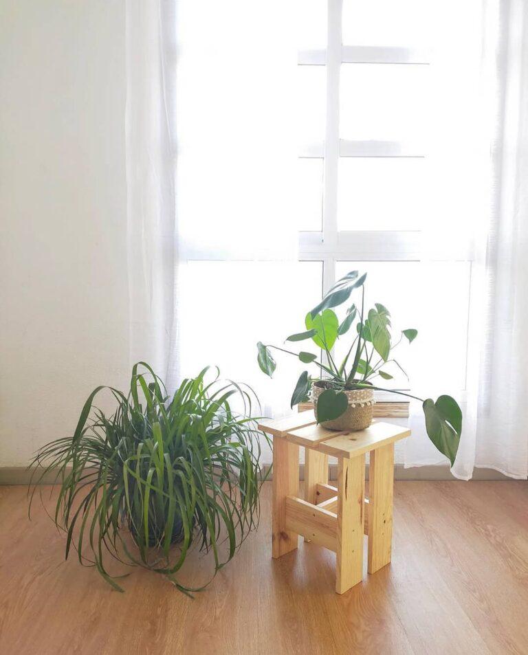 Elige plantas para el lugar de tu teletrabajo.